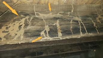 Termite Worker Control